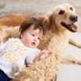 Le bébé et les animaux domestiques